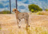 Ultimate African Safari