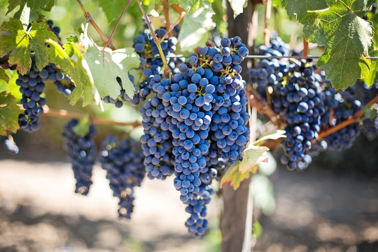 Grapes Are The Best To Increase Brain Functioning