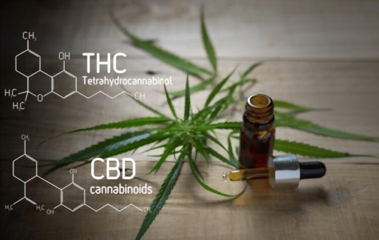5 Similarities and Differences between CBD and Delta-8