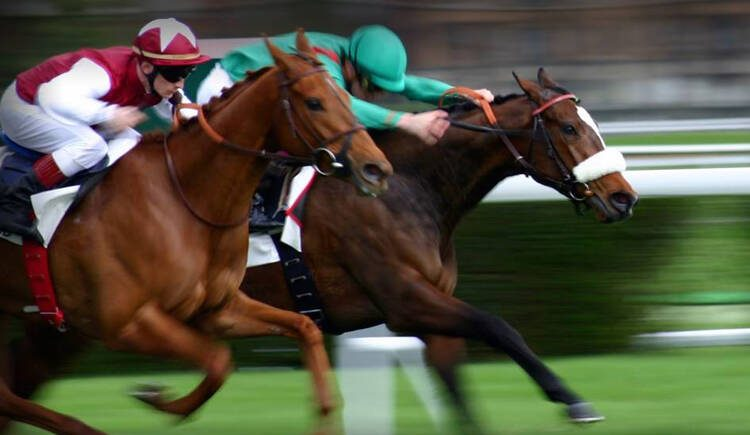 4 Crucial Horse Betting Tips You Should Know as Beginner
