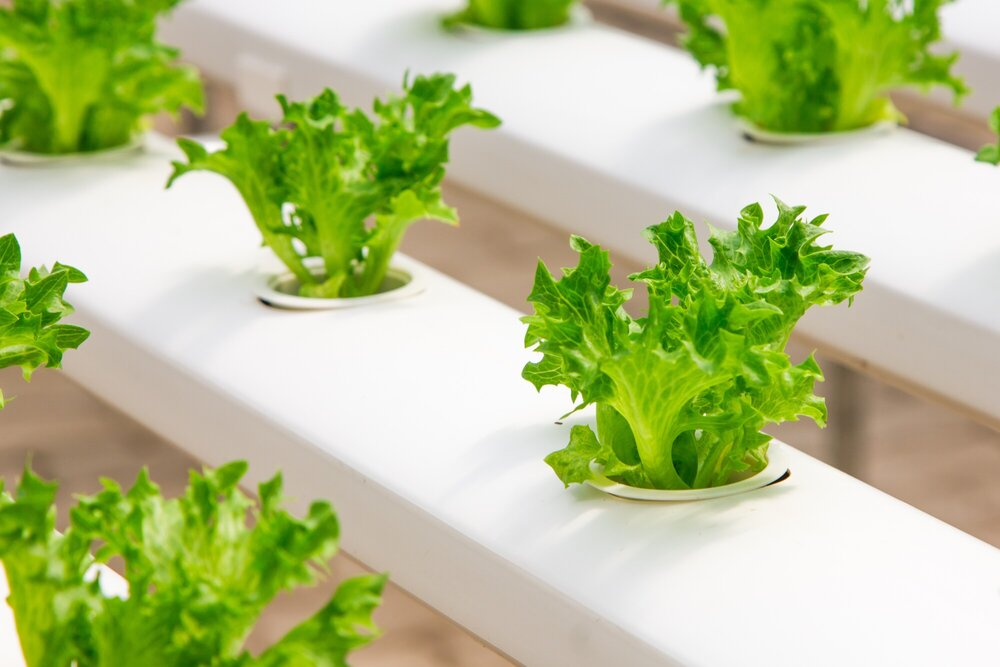 A Beginner's Guide on How to Use a Hydroponic Growing System
